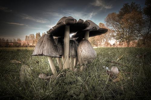 """""""mushroom family"""" von/by Thomas Mues"""