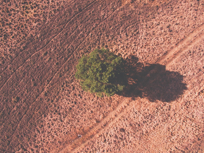 """Tree, shadow, drone view and bird view HD photo"" von Wilco Van Meppelen"